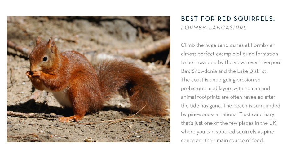 Best for red squirrels: Formby, Lancashire