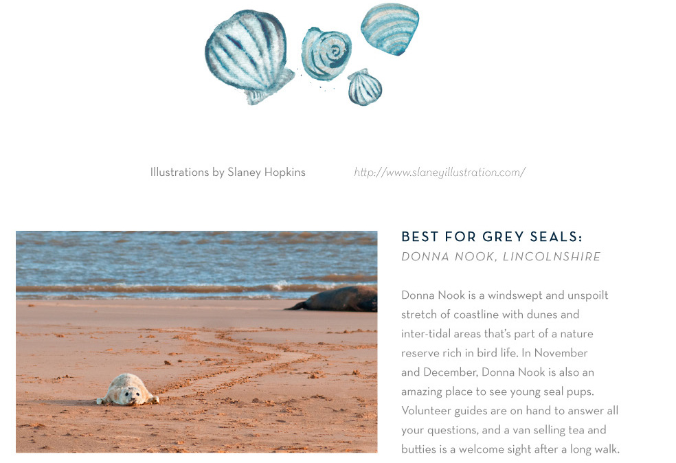 Best for Grey seals: Donna Nook, Lincolnshire